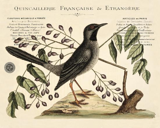 Vintage Bird - Marseilles-Stephanie Monahan-Giclee Print