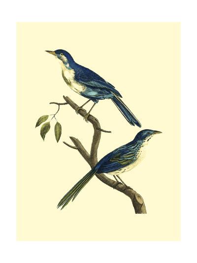 Vintage Bird Pair II-Levaillon-Art Print