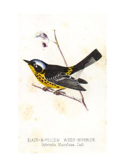 Vintage Bird--Art Print