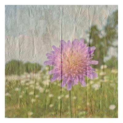 https://imgc.artprintimages.com/img/print/vintage-bloom-2_u-l-q1g7gw50.jpg?p=0