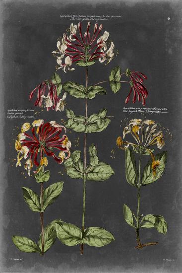 Vintage Botanical Chart I-Vision Studio-Art Print
