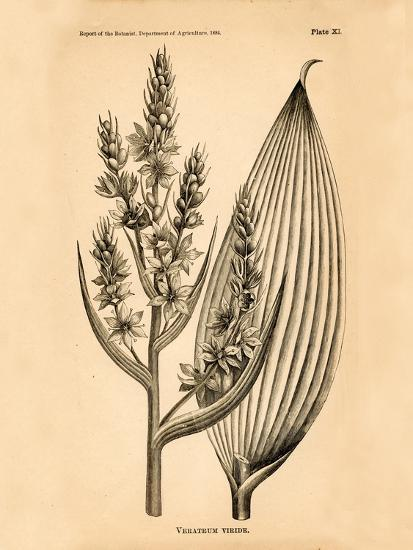 Vintage Botanical IV-Gregory Gorham-Art Print