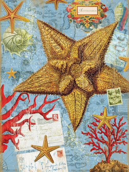 Vintage Botanical Starfish Print-Bessie Pease Gutmann-Giclee Print