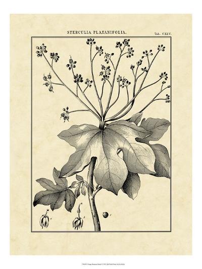 Vintage Botanical Study I-Sellier-Art Print