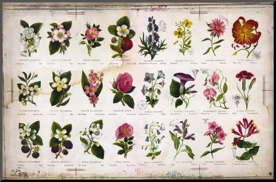 Vintage Botanical--Mounted Print