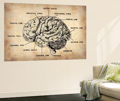 Vintage Brain Map Anatomy-NaxArt-Wall Mural
