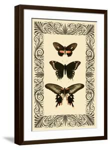 Vintage Butterfly Trio