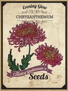 Vintage Chrysanthemum Seed Packet