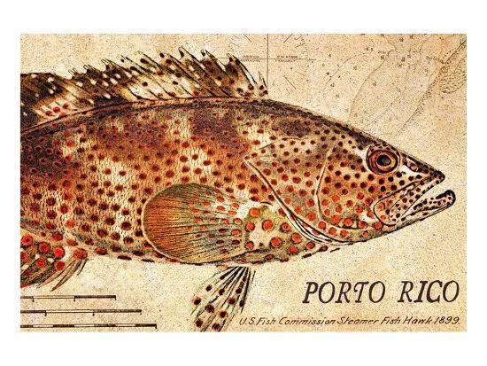 Vintage Color Fish: Porto Rico, US Fish Commission Fish Hawk, 1899-Christine Zalewski-Art Print
