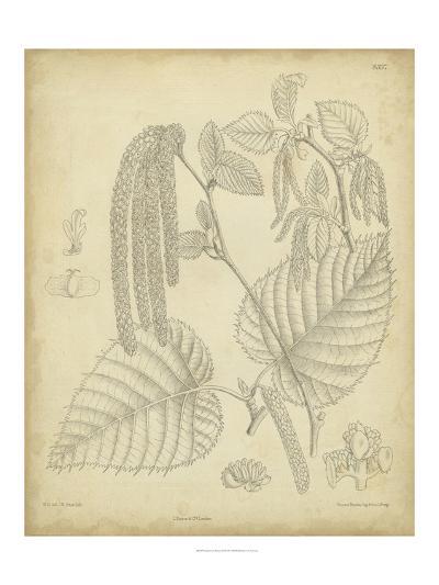 Vintage Curtis Botanical II-Samuel Curtis-Art Print