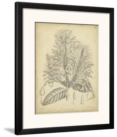 Vintage Curtis Botanical V-Samuel Curtis-Framed Art Print