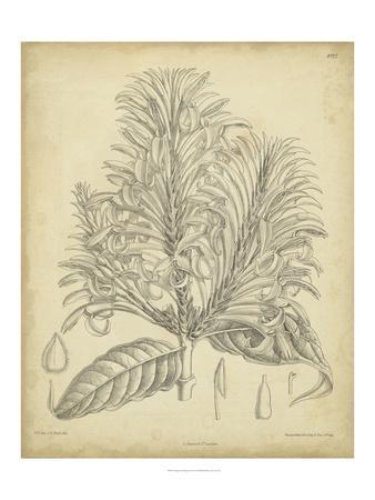 https://imgc.artprintimages.com/img/print/vintage-curtis-botanical-v_u-l-pfs8r50.jpg?p=0