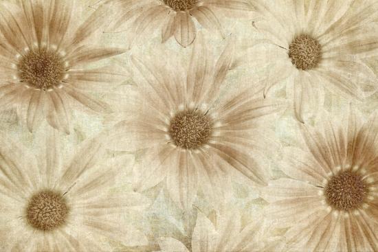 Vintage Daisies-Cora Niele-Photographic Print