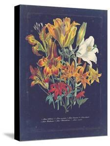 Vintage Dark Floral on Indigo I