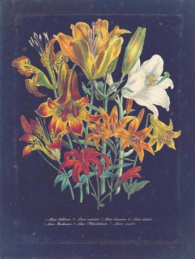 Vintage Dark Floral on Indigo I--Art Print