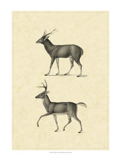 Vintage Deer II-Vision Studio-Art Print