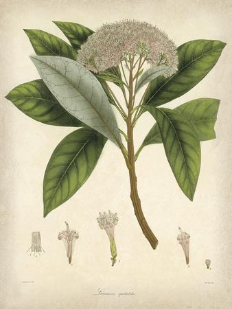 https://imgc.artprintimages.com/img/print/vintage-east-indian-plants-v_u-l-f8ji2p0.jpg?p=0