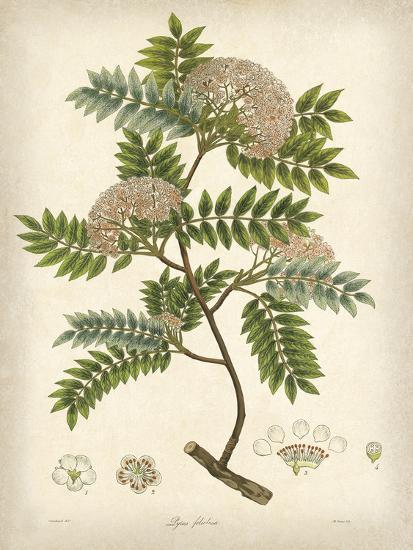 Vintage East Indian Plants VI-Maria Mendez-Art Print
