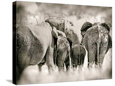 Vintage Elephant-Golie Miamee-Stretched Canvas Print
