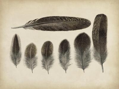 Vintage Feathers VI--Framed Art Print