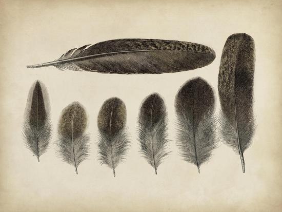 Vintage Feathers VI--Art Print