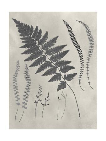 https://imgc.artprintimages.com/img/print/vintage-fern-study-ii_u-l-q19zqes0.jpg?p=0