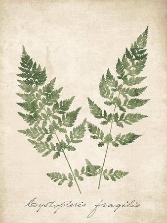 https://imgc.artprintimages.com/img/print/vintage-ferns-vii-no-border_u-l-q1b45uw0.jpg?p=0
