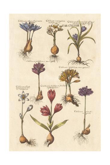 Vintage Florilegium I-Wild Apple Portfolio-Art Print
