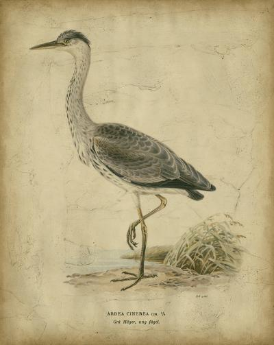 Vintage Heron II- Von Wright-Art Print