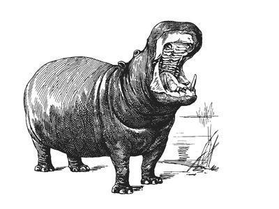 https://imgc.artprintimages.com/img/print/vintage-hippo_u-l-f8y41g0.jpg?p=0