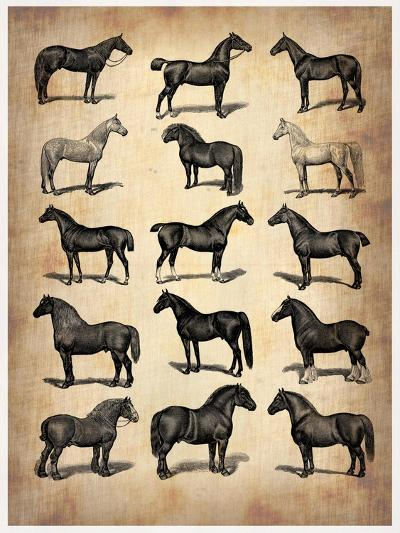 Vintage Horses Collection-NaxArt-Art Print