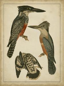 Vintage Kingfishers I