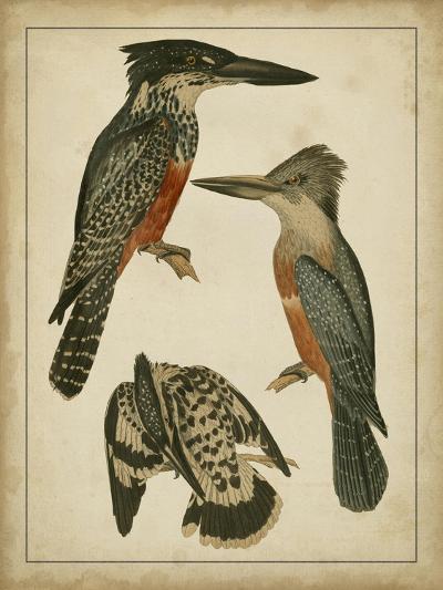 Vintage Kingfishers I--Art Print