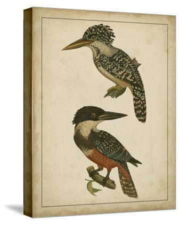 Vintage Kingfishers II