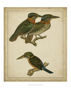 Vintage Kingfishers III