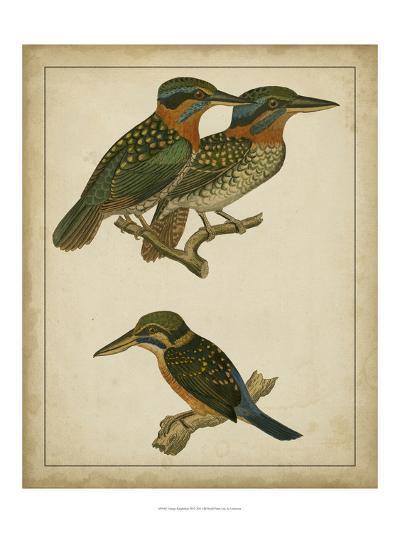Vintage Kingfishers III--Art Print