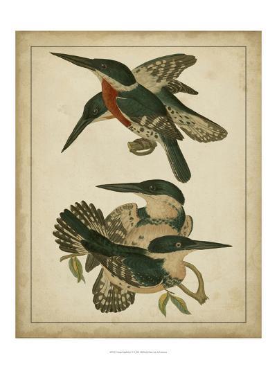 Vintage Kingfishers IV--Art Print