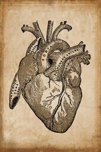 Anatomy 008 by Vintage Lavoie