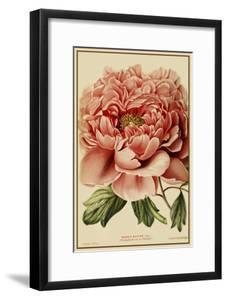 Peony by Vintage Lavoie