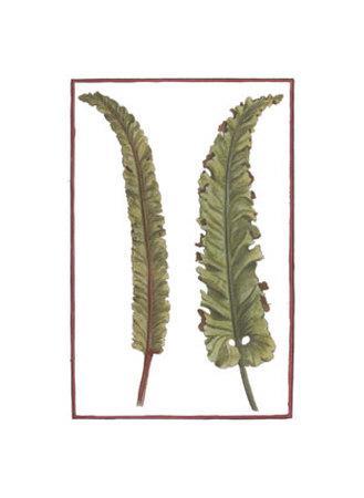 https://imgc.artprintimages.com/img/print/vintage-leaf-i_u-l-etft20.jpg?p=0