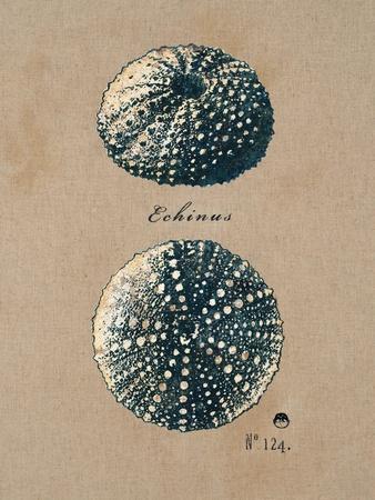 https://imgc.artprintimages.com/img/print/vintage-linen-sea-urchin_u-l-pgoqbp0.jpg?p=0