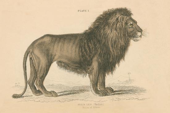 Vintage Lion-Wild Apple Portfolio-Art Print