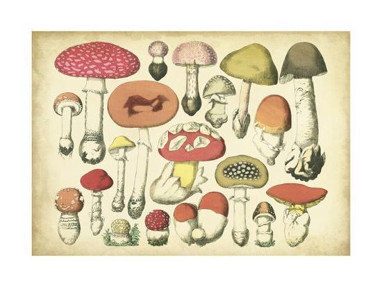 Vintage Mushroom Chart-Vision Studio-Art Print