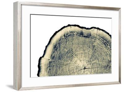 Vintage Neutral Monotone Piece of round Wood from a Large Tree. Rough Textured Surface with Rings,--Framed Photographic Print