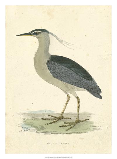 Vintage Night Heron-Morris-Giclee Print