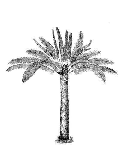 Vintage Palm Tree-Lebens Art-Art Print