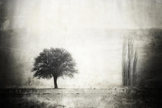 vintage-picture-with-lone-tree