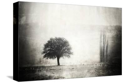 Vintage Picture with lone Tree--Stretched Canvas Print
