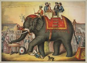 Performing Elephant by Vintage Reproduction