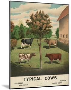Typical Cows, c. 1904 by Vintage Reproduction